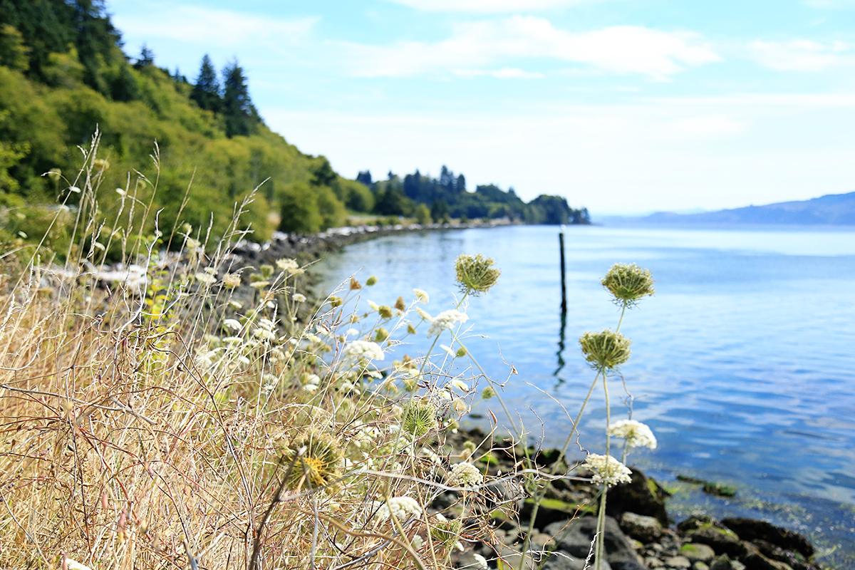 The Explorer's Edit | Netarts Bay, Oregon