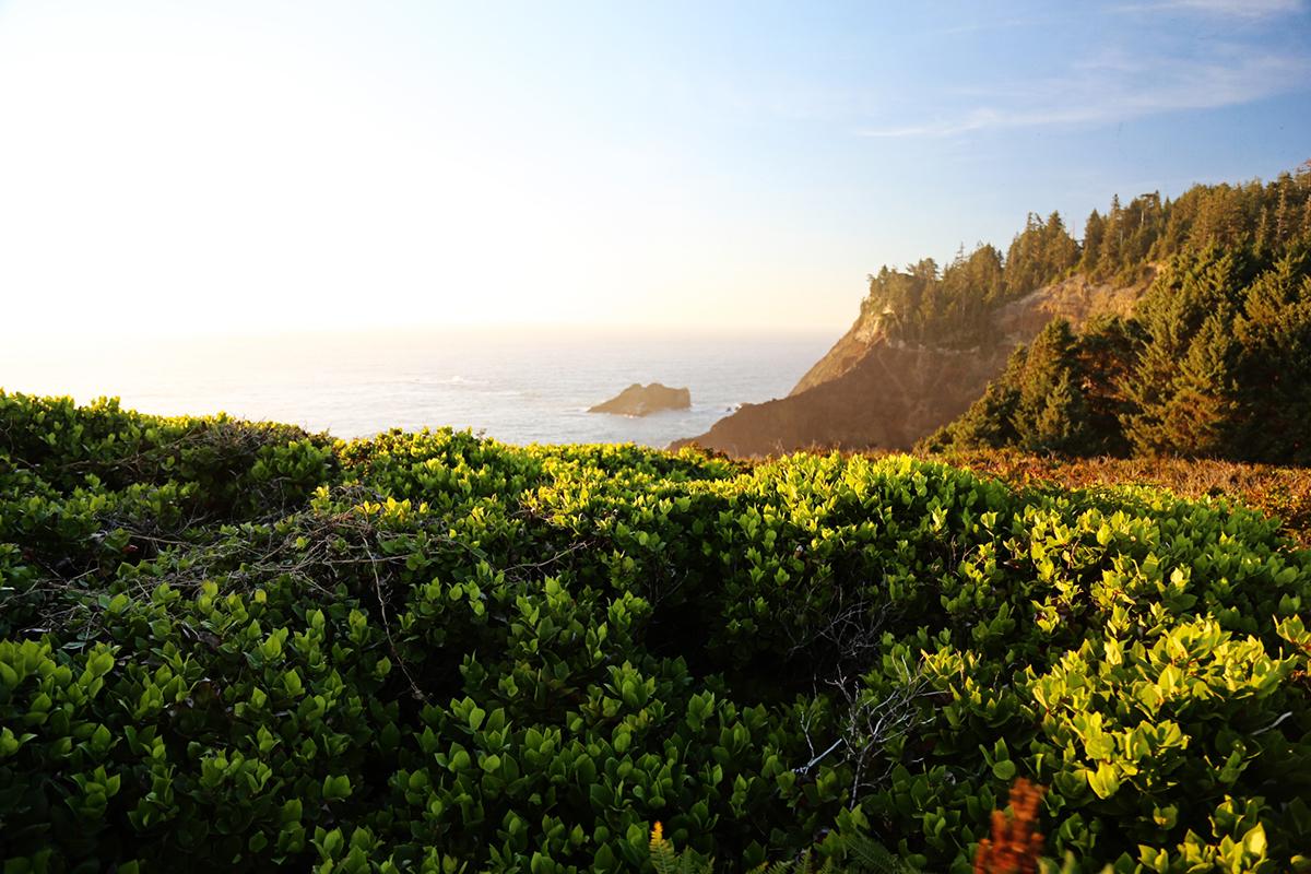The Explorer's Edit | Cape Falcone, Oswald West State Park, Oregon
